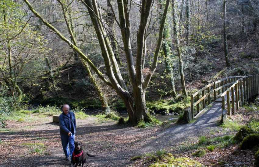 The mystical wooded Gwaun Valley offers peace and tranquillity away from the coast - pets welcome