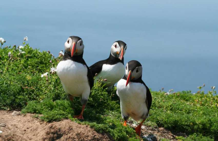 Do take the short boat trip over to Skomer for a real island adventure - the puffins in early summer are sure to make you smile!
