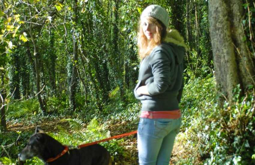 Enjoying an Autumn walk in the Woods nearby - most holiday cottages welcome pets