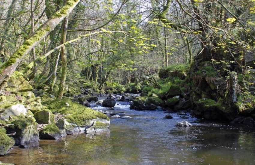 Discover the mysterious hidden Gwaun Valley in the foothills of the Preseli Mountains - perfect for lovers of wildlife and a haven of peace and tranquillity