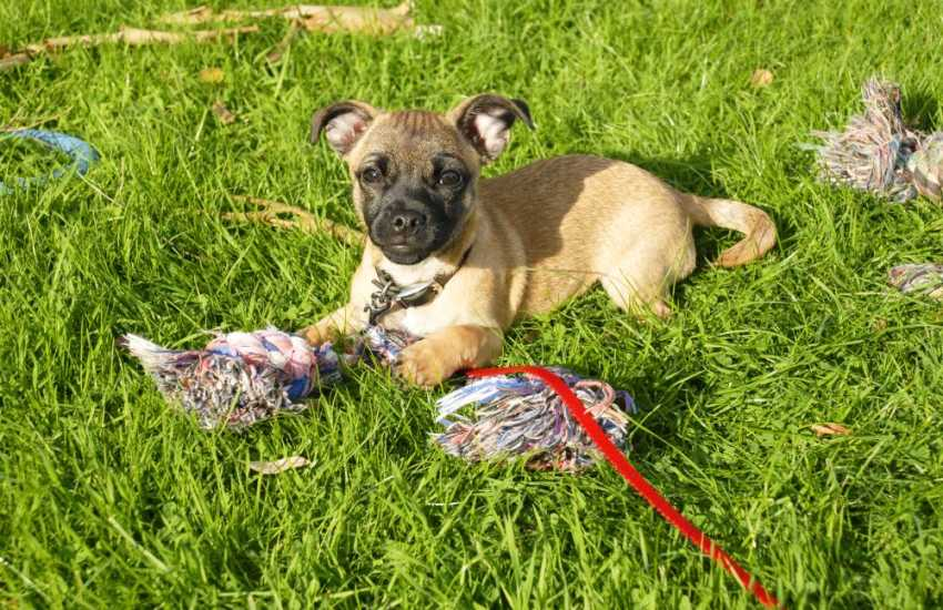 Having fun in the grass - many of our holiday cottages welcome your pets