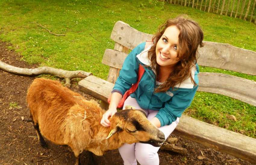 Making friends with the goats at Manor House Zoo