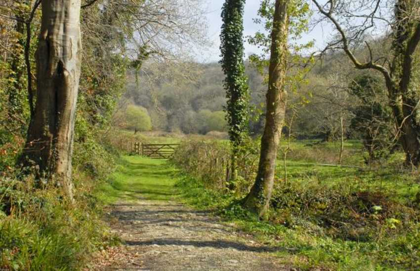 Gwaun Valley walks take you deep into a haven of wildlife, peace and tranquility