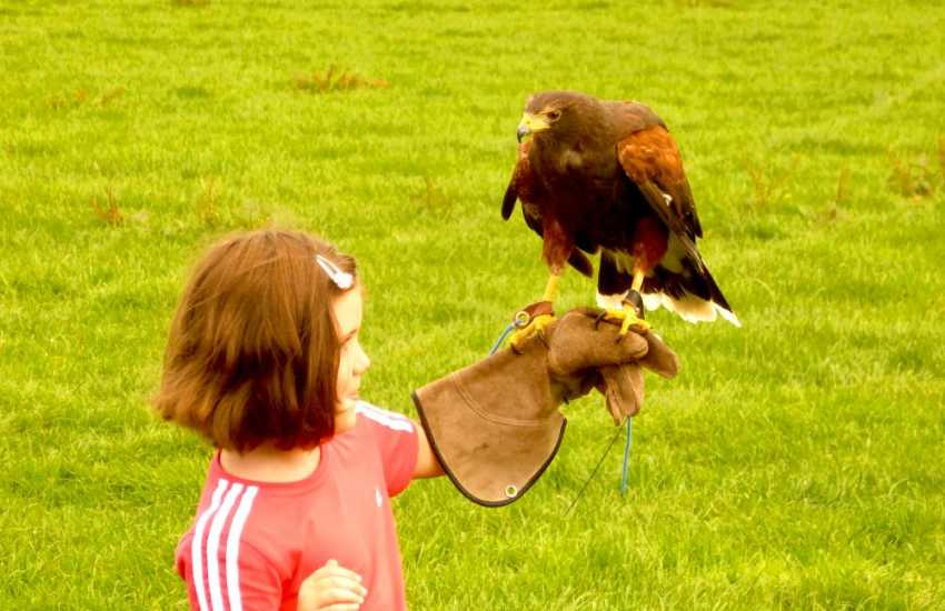 A day out at one of the local summer shows is fun for all the family