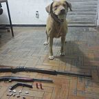 Cao Atylla localiza drogas e armas