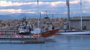 Comitè de cogestió del peix blau de les badies de Roses i Pals