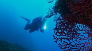 El Parc a la Ràdio - Curs per a guies subaquàtics