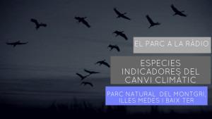 El Parc a la Ràdio - Espècies indicadores del canvi climàtic