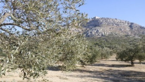 El Parc a la Ràdio - El Montgrí fa gestió forestal sostenible