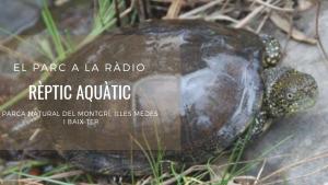 El Parc a la Ràdio - Un Rèptil al Parc Natural