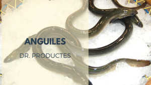 Dr. Productes - Anguiles