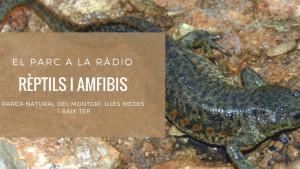 El Parc a la Ràdio - Rèptils i amfibis