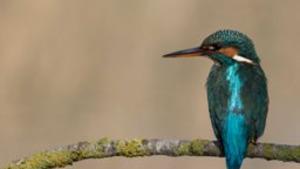 El Parc a la Ràdio - Mes de 300 espècies d'ocells al Parc Natural