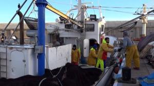 Activitat escassa a la confraria de pescadors