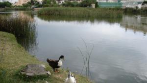 Suspeses les llicències durant un any a l'entorn de l'Estany de Poma