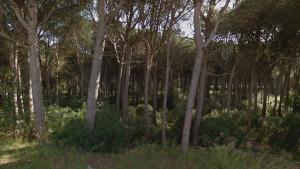 Franja forestal de prevenció contra incendis