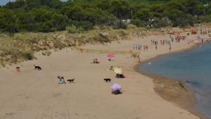 El ple aprova el pla d'usos de platges per als propers 4 anys