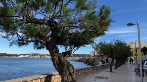 El ple de juny aprova el catàleg d'arbres protegits