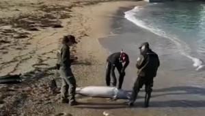 Apareix un dofí mort a La Plaja
