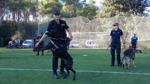 Taller de gossos policia a l'Escola Empúries