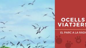 El Parc a la Ràdio - Ocells viatjers