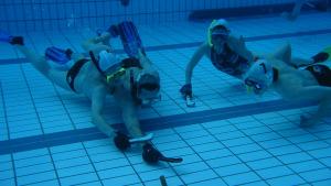 Els dos grans projectes de l'equip d'hoquei subaquàtic