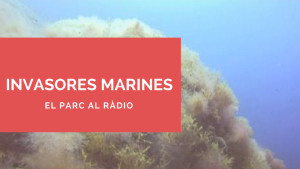 El Parc a la Ràdio - Invasores marines