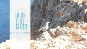 El Parc a la Ràdio - Gavians Illes Medes