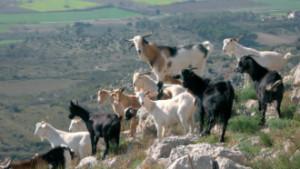 El Parc a la Ràdio - Cabres salvatges al Montgrí