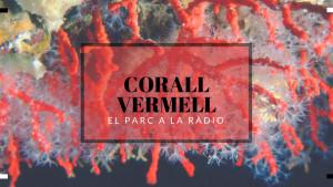 El Parc a la Ràdio - Corall vermell