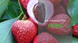 Dr. Productes - Litxis