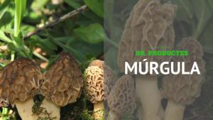 Dr. Productes - Múrgula