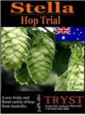 Tryst Stella Hop Trial  - Golden Ale/Blond Ale