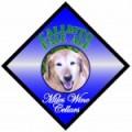 Miles Craft Ales Callisto Pale Ale