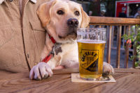 Mother Road Brewing Co.