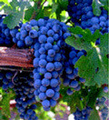 The Grape and Granary