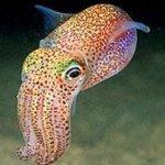 books for squids