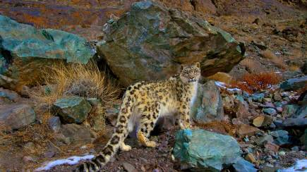 RedBalloon Snow Leopard Tracking in India - Hiking Trip - 15 Nights