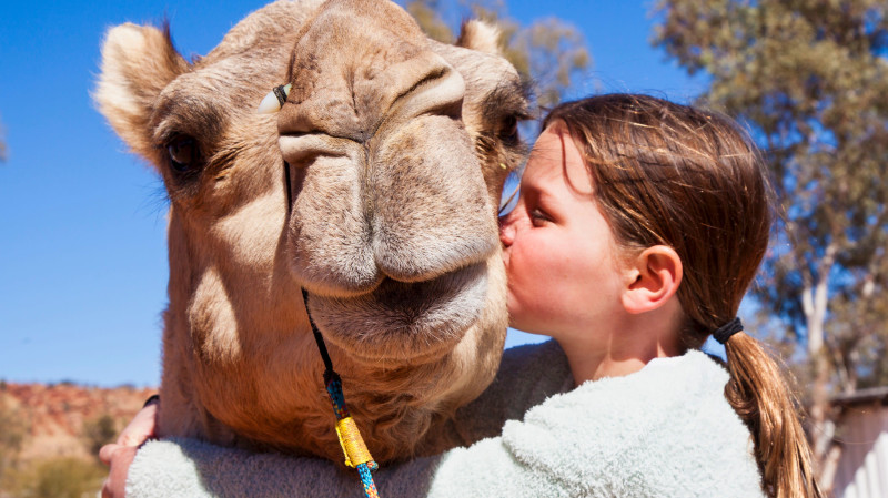 RedBalloon Outback Sunset Camel Ride Tour - Child