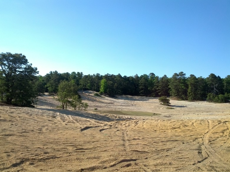 pinebarrens