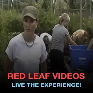 red leaf videos
