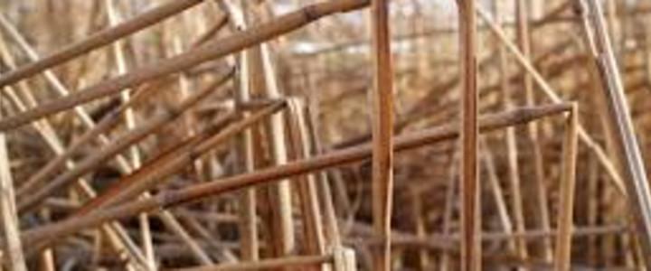 Das geknickte Rohr und der glimmende Docht Blog-Post Bild