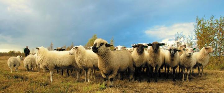 Kleine-Herde-Theologie versus Reichgottes-Theologie Blog-Post Bild