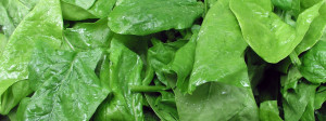 Spinach leaves hero