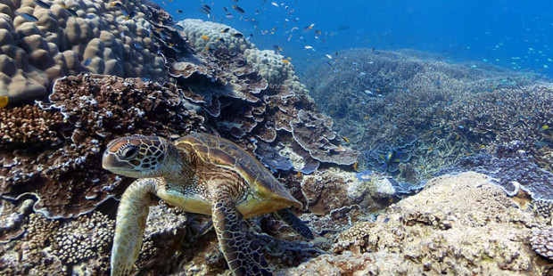 Google Street View Dives Under the Sea in New Update