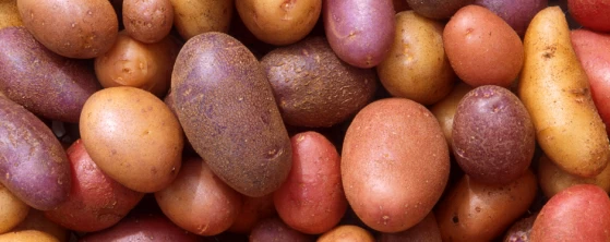 potatoes.jpg