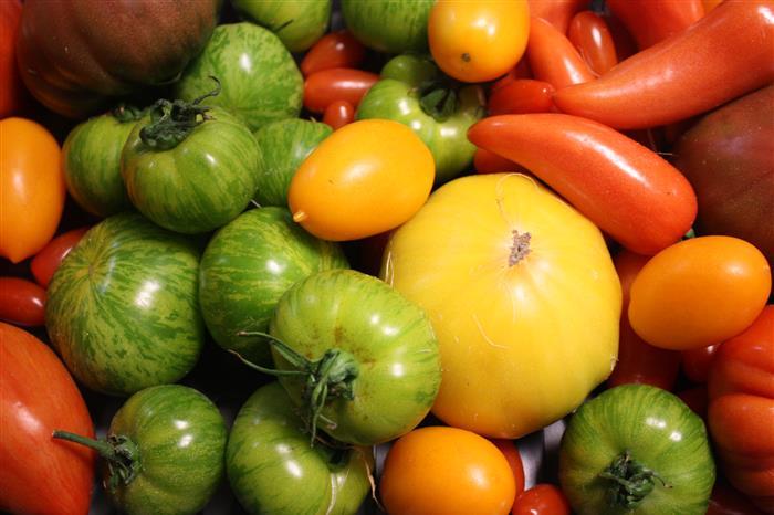 Salade de tomates de couleur, pistou, tapenade, émincé de volaille vapeur