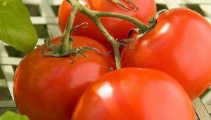 Tomato cancer