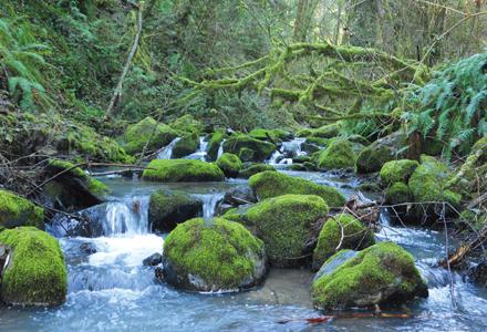 Balach-creek-forest-park_a5exas_maefib