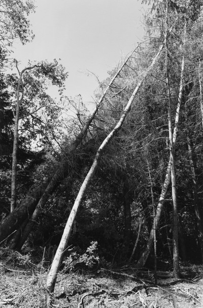 Edge of a Clearcut, Clatsop County, Oregon, 2000